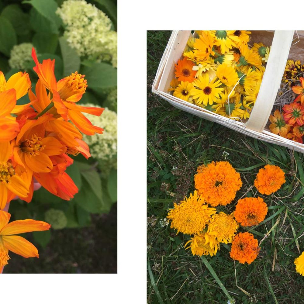 Collage von zwei Bildern: links ein orangeleuchtender Strauß von Schwefelkosmee, rechts ein Koerbchen voller Blüten von Ringelblume, Mädchenauge und Schwefelkosmee