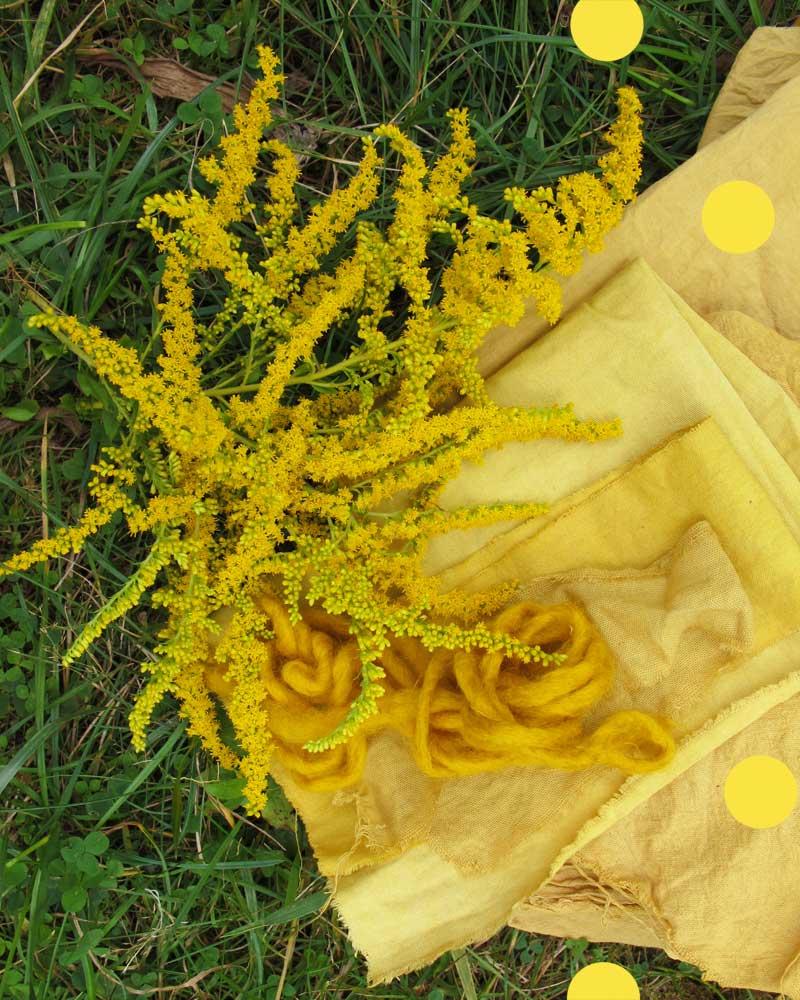 Leuchtende Gelbtöne mit Pflanzen gefärbt