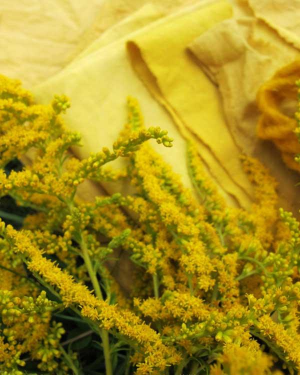 Stoffe gelb gefärbt mit Goldrute
